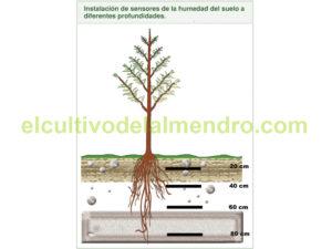 01-Plantacion-almendro- suelo-humedad