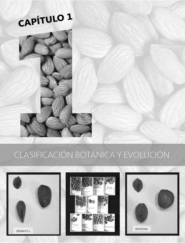 1 Clasificación botánica y evolución del almendro portada