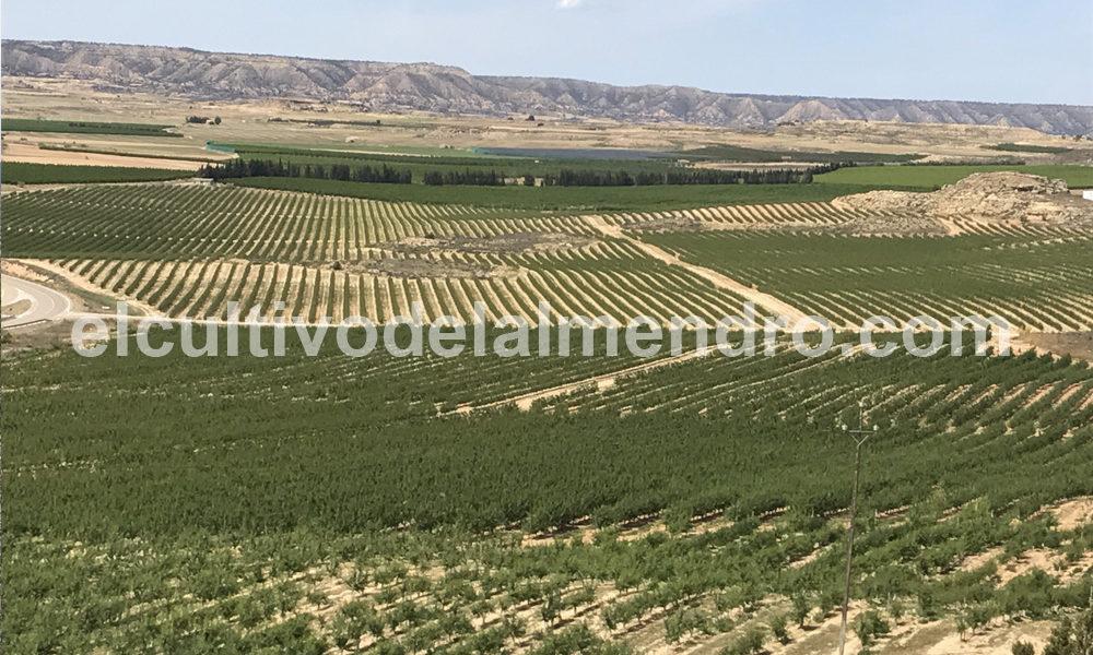 técnicas y cultivos plantaciones almendros