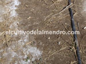 Acumulación de sales en perímetro del bulbo húmedo