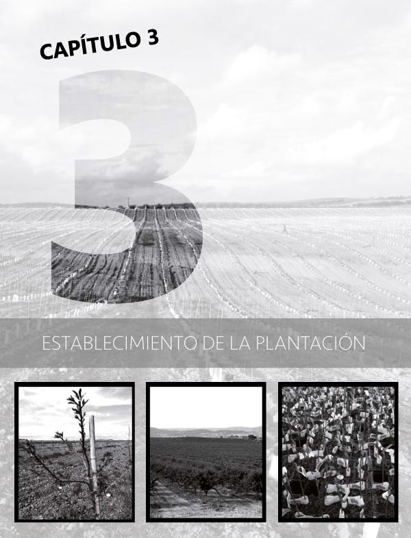 Establecimiento de las plantaciones de almendros portada