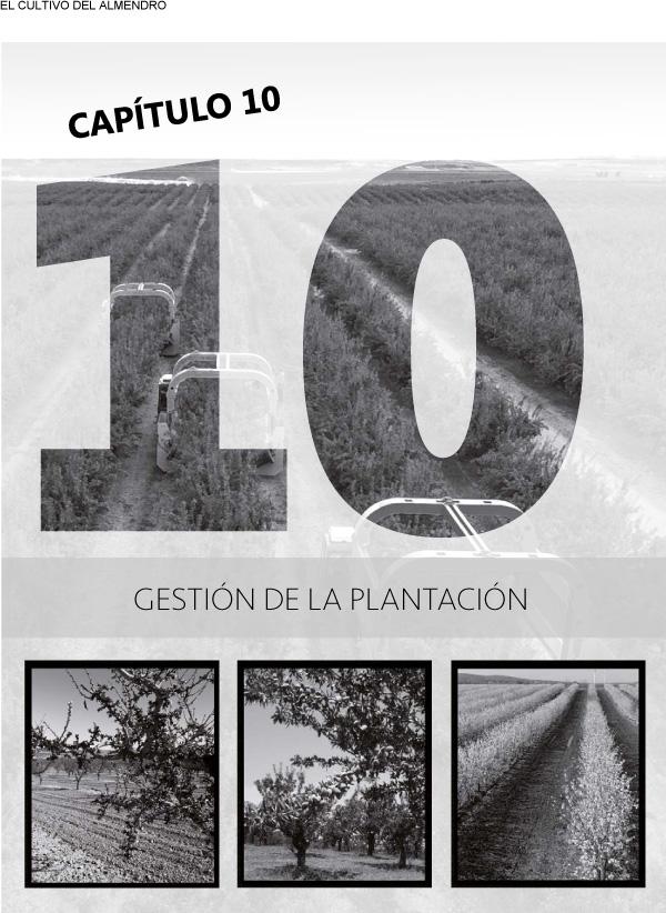 Gestión de la plantación o explotación de almendros: suelo, malas hierbas, poda, cosecha recolección, económia